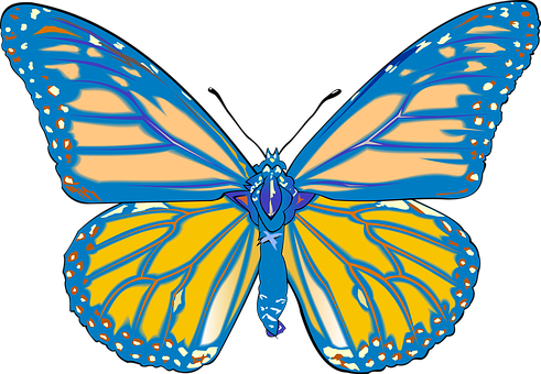 Butterfly, Drawing, Graphics, Graphic Designer, Vector
