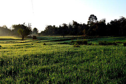 Landscape, Field, Panoramic, Agriculture, Grass, Farm