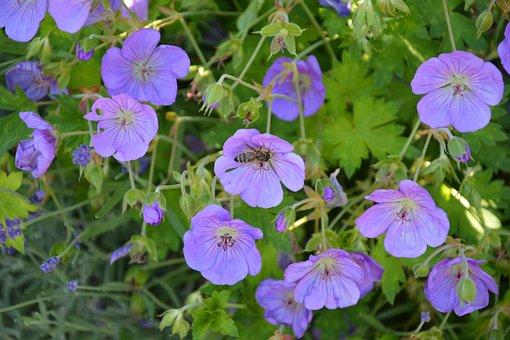 Flowers, Slovakia, Meadow, In Bloom Flowers, Field
