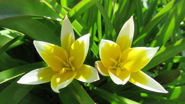 Yellow Flowers, Nature, Flora, Leaf, Flower, Garden