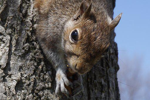 Mammals, Nature, Wildlife, Animalia, Skin, Squirrel