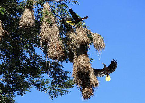 Nature, Tree, Sky, Outdoors, Birds, Nest, Nests