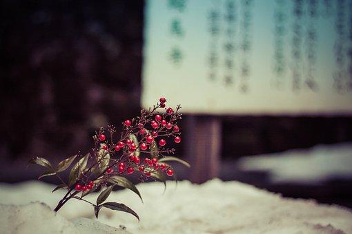 Winter, Nature, Outdoors, Japan