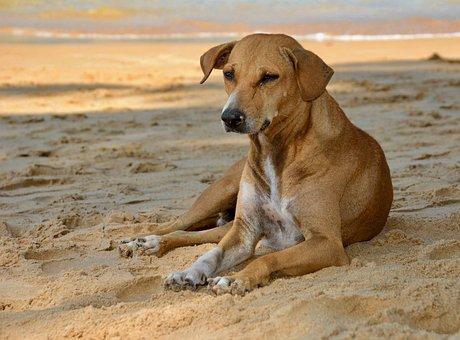 Dog, Sand