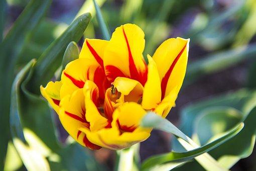 Spring, Bloom, White, Beautiful, Warm, Sun Nature