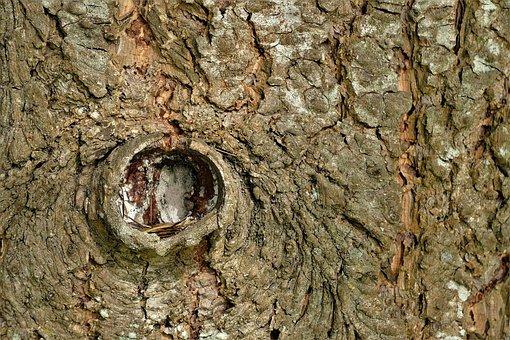 Bark, Texture, Background, Tree, Tribe, Nature, Rau