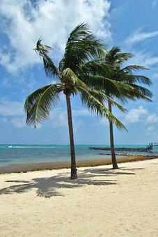 Sand, Beach, Tropical, Tree, Coconut, Seashore, Summer