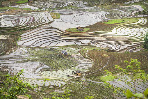 Blind Stretch Comb, Lao Cai, Water, Vietnam, Rice