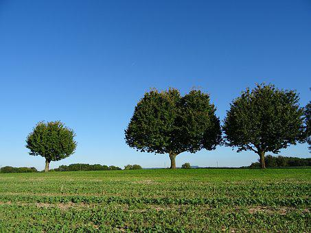 Trees, Field, Agriculture, Sky, Blue, Nice Weather