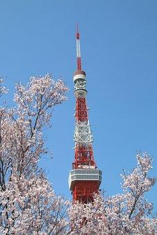 Blue Sky, Cherry Blossom, Tower, Tokyo Tower, High, Sky