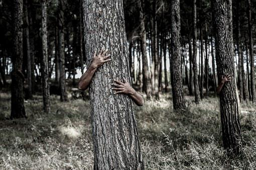 Hiding, Tree, Hands, Camouflage, Invisible, Hidden