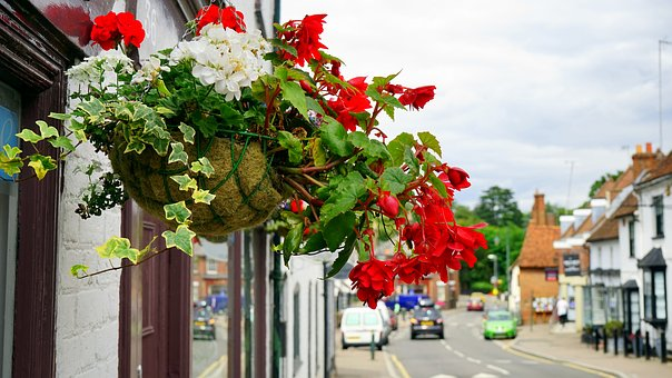 Flowers, Street, Decoration, Spring, Summer, Plant
