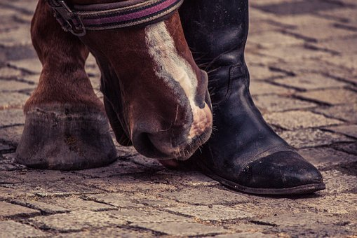 Horse, Huf, Boots, Horse Hoof, Foot, Animal