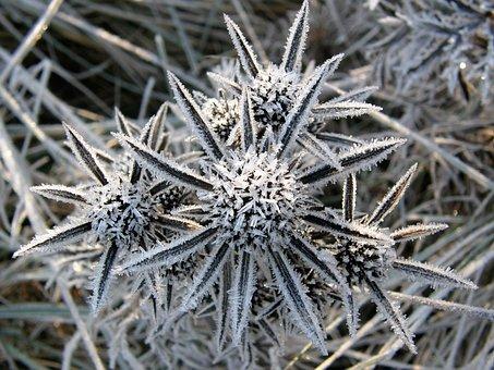 Karst Flower, Ice, Winter, Morning, Frost, Crystal