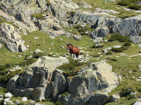 Horse, Rocks, High Mountain, Pyrenees, Port Of Tavascan