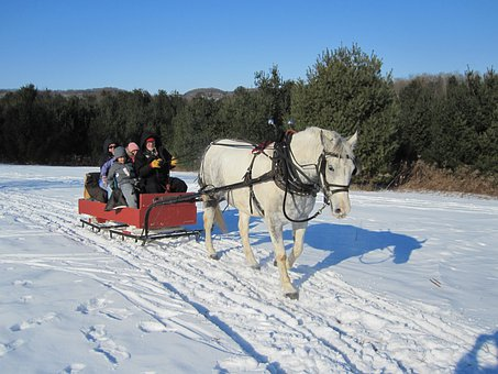 Horse, Sleigh, Sleigh Ride, Winter, Sled, Cold, Ride