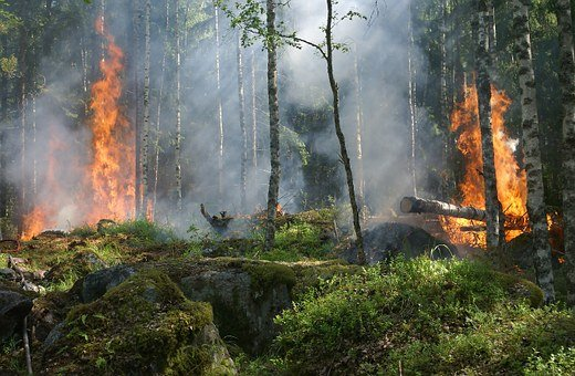 Forest Fire, Fire, Smoke, Conservation