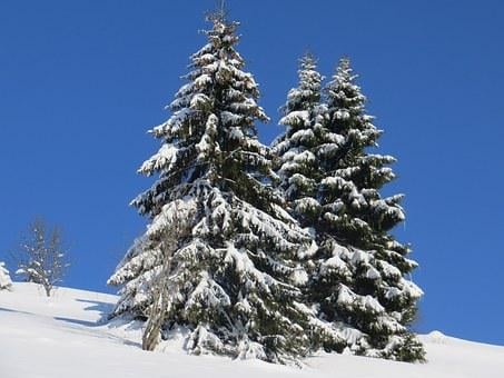 Winter, Fir, Snow, Black Forest, Wintry, Forest