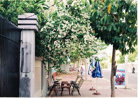 Street Life, Vietnam, Coffee Shop, Street, Spring, Cafe
