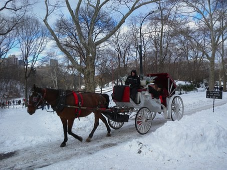 New York City, Horse, Carriage, Buggy, Winter, Snow