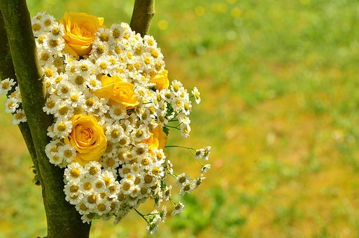 Bouquet, Roses, Yellow Roses, Daisies, Yellow Flowers