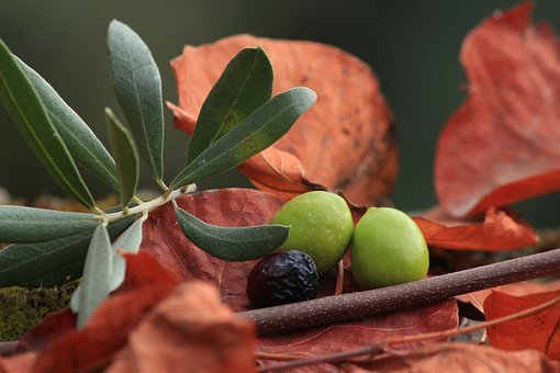 Olives, Organic, Black Olives, Olive Yesil, Fruit, Food