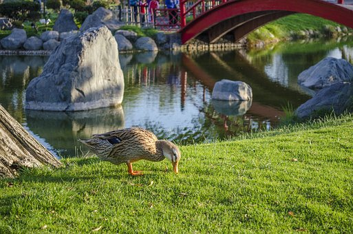Nature, Lawn, Open Air, Body Of Water, Park, Birds