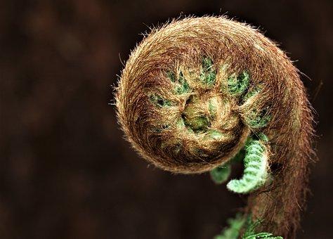 Nature, Wildlife, Closeup, Flora, Spiral, Leaf, Fern