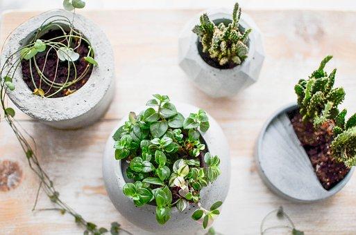Concrete, Cement, Diy, Flowerpot