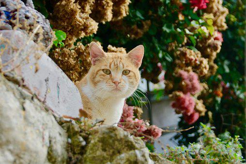 Nature, The Animal Kingdom, Outdoors, Cute, Cat, Look