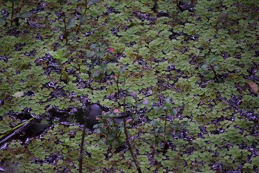 Outdoors, Nature, Flora, Wood, Desktop, Moss