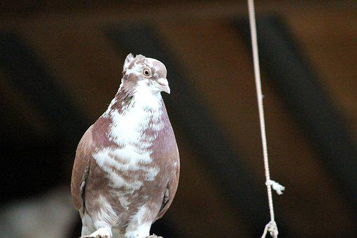 Dove, Nature, Living Nature, Outdoors, Bird