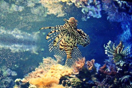 Underwater, Coral, Reef, Fish, Ocean, Aquarium, Hamburg