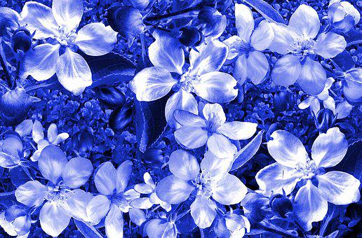 Flower, Flora, Nature, Floral, Garden