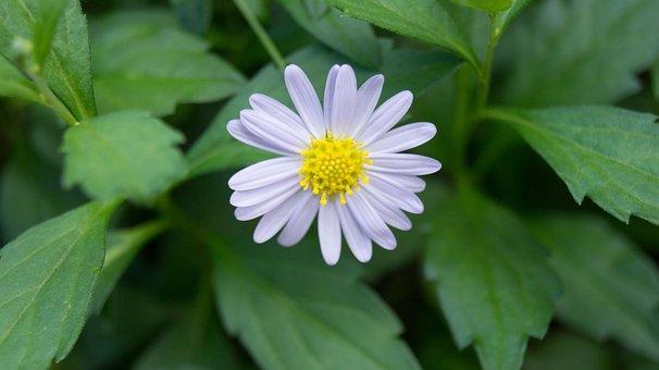 Nature, Flora, Leaf, Summer, Flower, Garden, Closeup