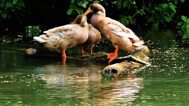 Bird, Nature, Animal, Body Of Water, Fauna, Goose