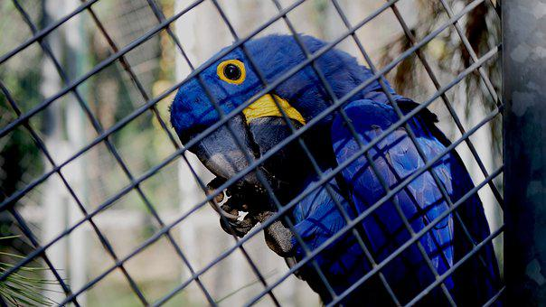 Bird, Nature, Cage, Parrot, Summer, Park, Greens