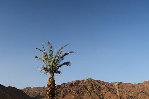Uhut, Mountain, Medina, I've To Medina, Nature, Desert