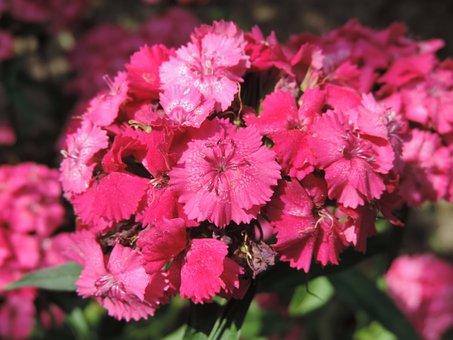 Flower, Flora, Nature, Garden, Leaf