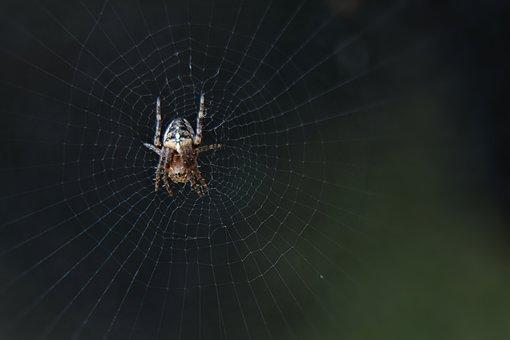 Nature, Spin, Macro, Bug, Spider Web, Garden