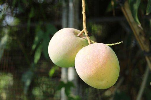 Fruit, Mango, Thailand Fruit, Organic, Mango Juice
