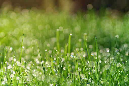 Grass, Meadow, Dew, Pearl, Bokeh, Plant, Background