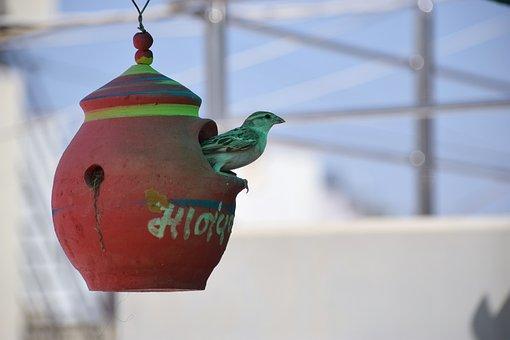 Outdoors, Nature, Bird, Sparrow, Day