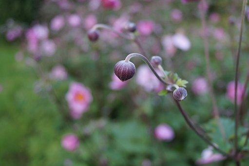 Flower, Nature, Plant, Garden, Summer, Outdoors, Sheet
