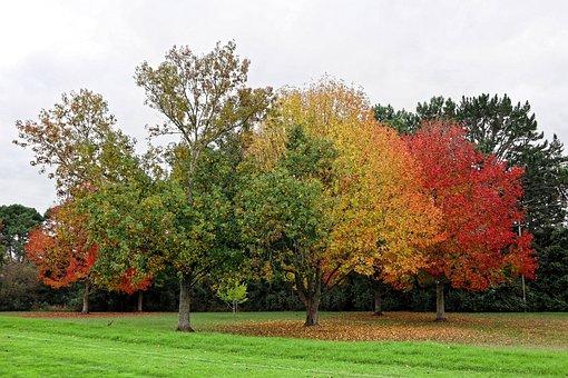 Tree, Nature, Park, Leaf, Season