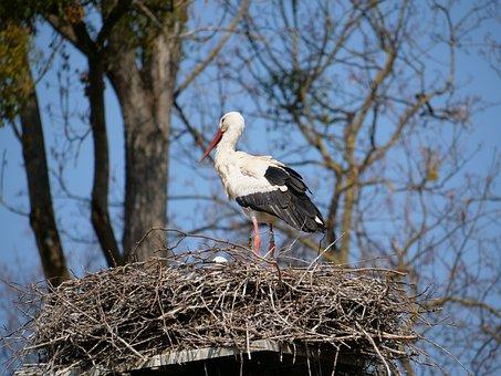 Stork, Nest, Young, Bird, Nature, Animal World, Wing