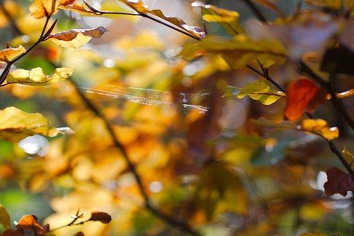 Leaf, Autumn, Tree, Nature, Season, Plant, Growth, Park