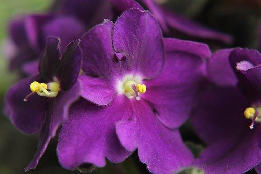 Flower, Pet, Nature, Indoor Plant, Home Flower, Plant