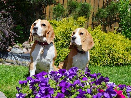 Flower, Grass, Summer, Dog, Cute, Pet, Garden, Nature