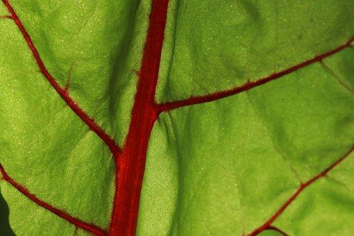 Leaf, Plant, Background, Chard, Herb Stalk, Leaf Vein